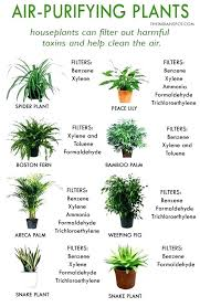 common indoor plants best house plants for clean air and better health the spot special good