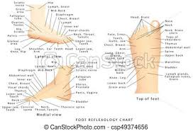 Top Of Foot Reflex Chart Reflexology Chart