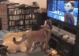 dog watching tv gif. load 13 more images grid view dog watching tv gif d