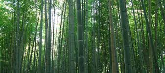 with extremely low or high humidity will require a longer acclimation period learn more about acclimating bamboo flooring in extreme climates