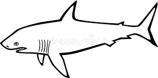 Shark Gills Stock Illustrations 257 Shark Gills Stock