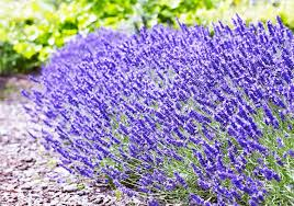 gardens4you your garden center