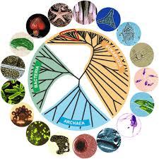 Three Domains Of Life Venn Diagram Prokaryotes Bacteria Archaea Biology 1520