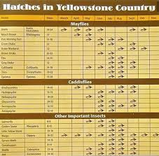 Wyoming Hatch Chart Ynp Hatch Chart Planettrout
