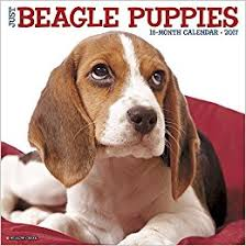 beagle puppies. Interesting Beagle Other Sellers On Amazon With Beagle Puppies