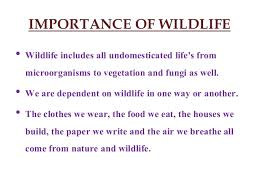 preservation of wildlife essay preservation of wildlife essay  on wild life protection essay on wild life protection