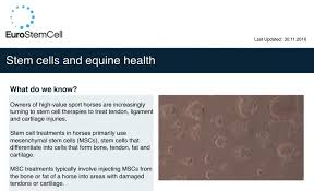 Stem Cells And Equine Health | Eurostemcell