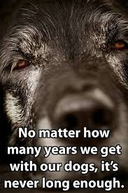 Quotes About Dogs Love Amazing Top 48 Greatest Dog Quotes And Sayings With Images
