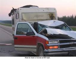 truck campers | Moose Hit By Truck and Camper | pickup campers ...