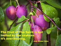 79 Best PLUM  TREES ECT Images On Pinterest  Plum Tree Take Plum Tree Not Producing Fruit