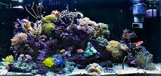 Image result for cost of aquarium service