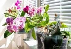 Image result for Should you mist orchids?