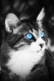 mobile cat wallpapers android iphone