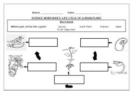 Plants need sun, soil, air and water. Science Worksheet Life Cycle Of A Bean Plant By Science Workshop