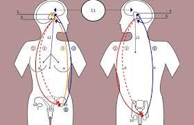 Accutane hormonelle, akne / Synthroid acelera o metabolismo
