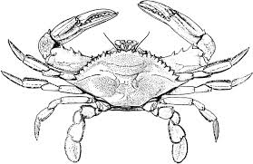 Small Picture Printable crab coloring sheet blue crab coloring page animals town