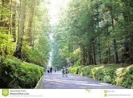 Fantastic Lighting Beautiful Forest Walk Way Near Nikko World Heritage Japan