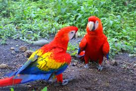 Image result for beautiful parrots images