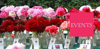 display gardens u pick peonies photography peak bloom party private events