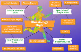 Careers With Exercise Science Degree 12 Jobs For Kinesiology Majors The University Network