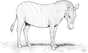 Small Picture Zebra coloring page Free Printable Coloring Pages