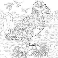 Papegaaiduiker Vectoren Illustraties En Clipart 123rf