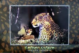 african leopard animals hardboards