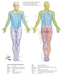 Sensation Chart Sensation Testing Peripheral Nerve Lesion Rayner Smale