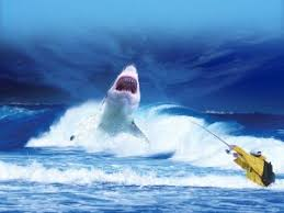 shark attack on humans. Unique Humans Shark Attacks Predatory Shark Approaching A Fisherman With Attack On Humans H