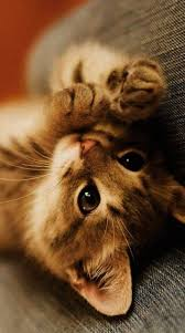 cute kittens and puppies wallpaper. Unique Kittens Cute Kittens And Puppies Wallpaper Nice Inside S