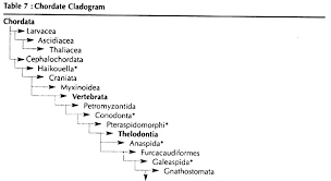 Phylum Chordata Meaning Features And Ancestry Biology