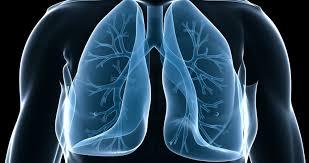 「気管」の画像検索結果