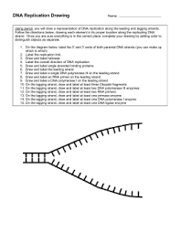 dna replication web quest dna replication fork drawing