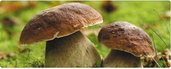 """Résultat de recherche d'images pour """"champignons"""""""