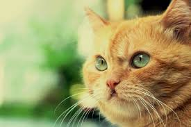 Most Common Viruses In Cats | BASEPAWS