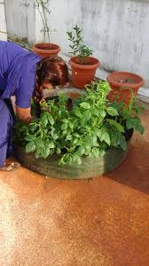 Terrace Kitchen Garden Our Wonderful Little Terrace Kitchen Garden Album On Imgur