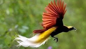 Gambar alam salju musim dingin hitam dan putih jejak. Burung Cendrawasih Gambar Masteran Kicau Club