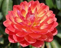most beautiful flowers list list of