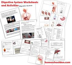 Digestive System Worksheets, Lapbook/Interactive Notebook Pieces ...