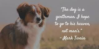 Quotes About Dogs Gorgeous Dog Gone 48 Inspirational Quotes About Losing A Dog Terribly Terrier