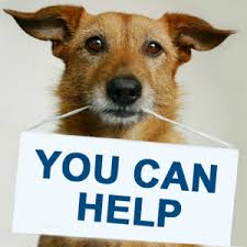 animal shelter donate. Plain Donate Welcome To The FLASh Website For Animal Shelter Donate