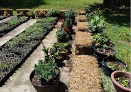 105 strawbale gardening with