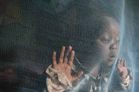 the tenacious buzz of malaria wsj a 3 year old girl plays under an insecticide treated mosquito net in