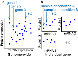 Relationship between differentially expressed mRNA and mRNA-protein  correlations in a xenograft model system