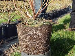 blueberry soil mix. Unique Mix BVB BC6 Blueberry Mix  70 L  In Soil