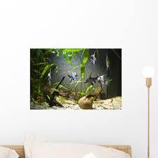 Aquarium Mural Design Amazon Com Wallmonkeys Freshwater Aquarium Wall Mural Peel
