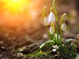 articles lifestylehome gardenpeter s gardening tips for february 2018