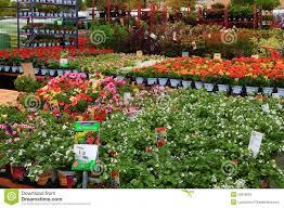 garden nurseries near me. Home Depot Nursery Editorial Stock Photo Image Of Farm 53615818 Pertaining To Near Garden Nurseries Me
