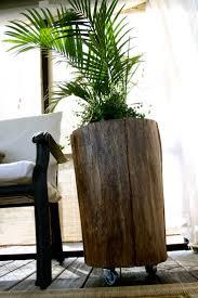Tree Stump Seats 97 Best Tree Stumps Images On Pinterest Tree Stumps Diy And Wood