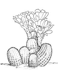 Small Picture Cactus coloring pages Download and print Cactus coloring pages
